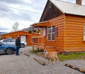 Yellowstone's Treasure Cabin